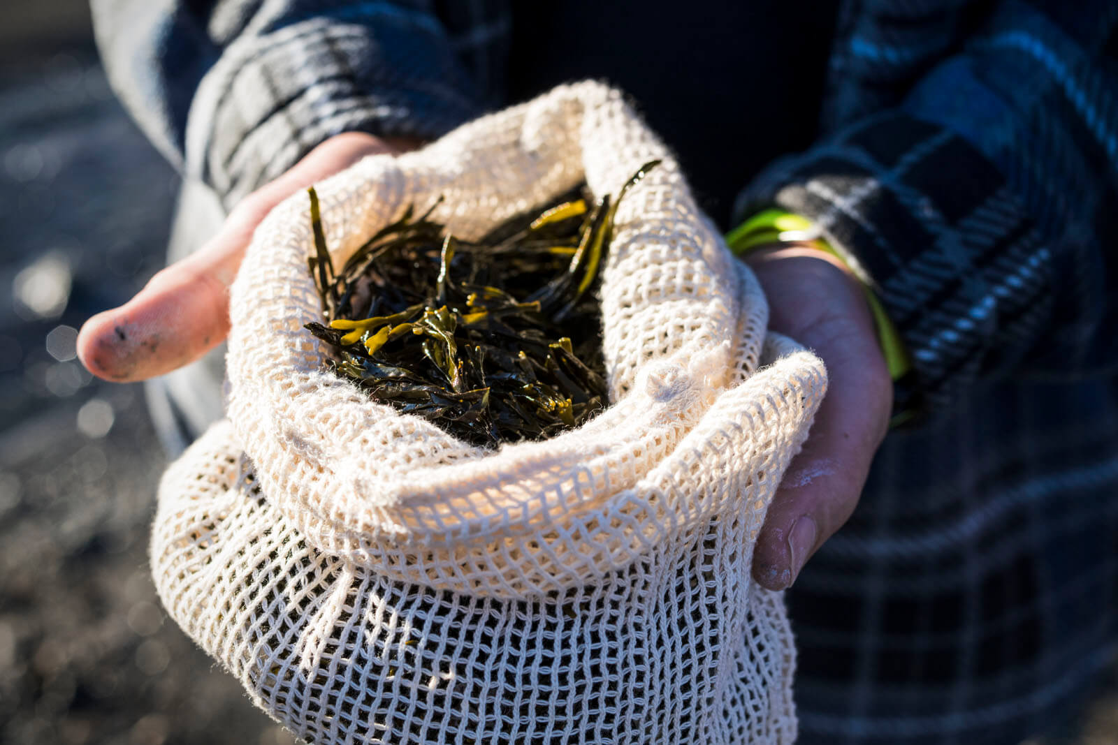 foraging bladderwrack shore to shore film kosta browne